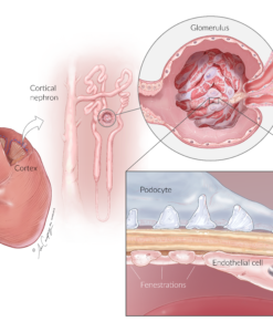 NhGEC Kidney