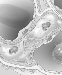 NhKM Kidney